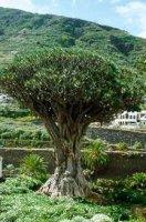 Северо-Запад Tenerife